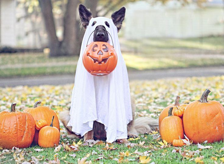 dog ghost